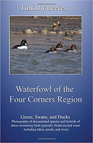 waterfowl-of-the-four-corners-region