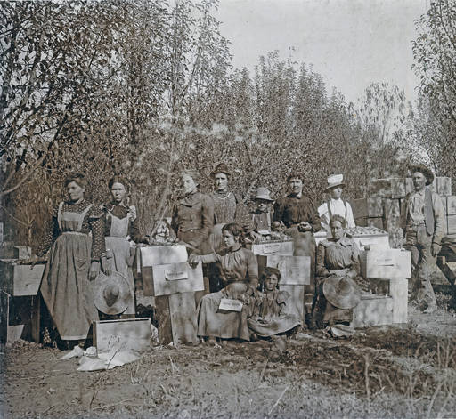 Hyde Exploratory Apple Pickers
